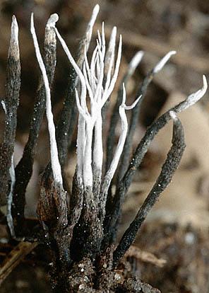 The funga